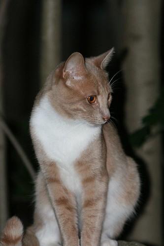 Cat 0707211000x