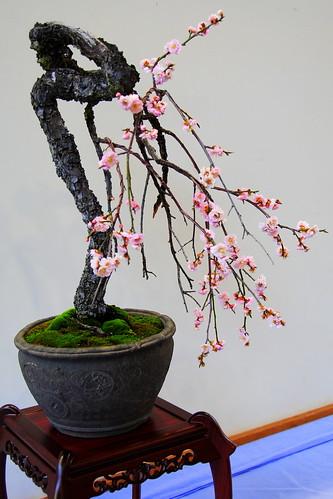 Shidareume Matsuri 009r