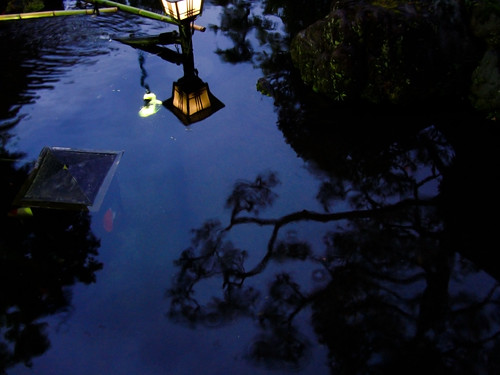 The call of a reflected lamplight
