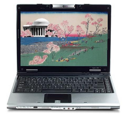 Cherry Blossom Webcam