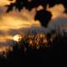 Chula Vista Sunset - Orange