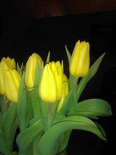 tulipanes sin filtro