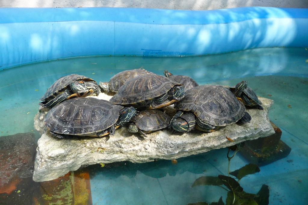 New Turtle Rock