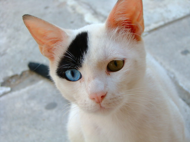 22 Mutant Animals That Have Two Different Colored Eyes