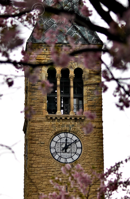 McGraw Tower between the blossoms