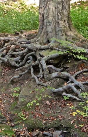 Rootedness