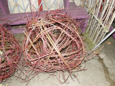Globe, Red Dogwood