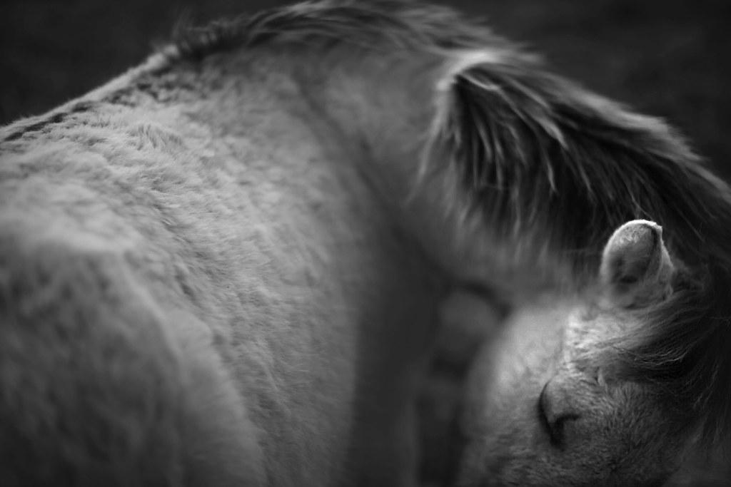 Wild horses 29