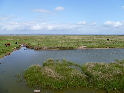 Burgh Marsh near the possible site of Milecastle 74