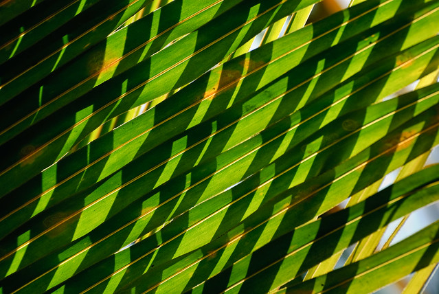 Patterns In Nature Palm Leaves Amp Shadows Patterns In