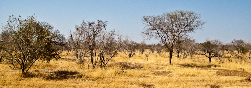 Trockene Landschaft