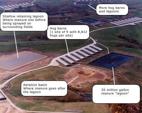Aerial Photo of a Factory Farm