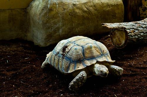 20110603_Zoo_3