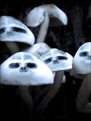 Evil Shrooms