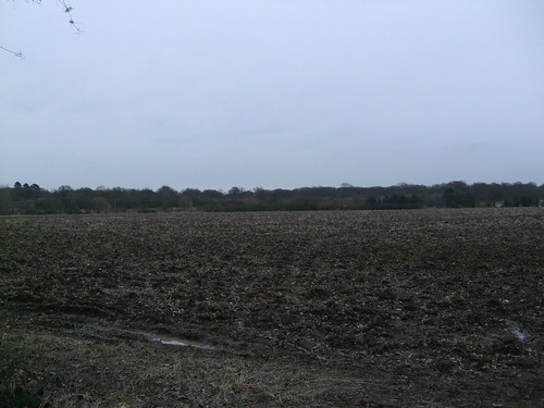 Great Hallingbury / Hatfield Forest