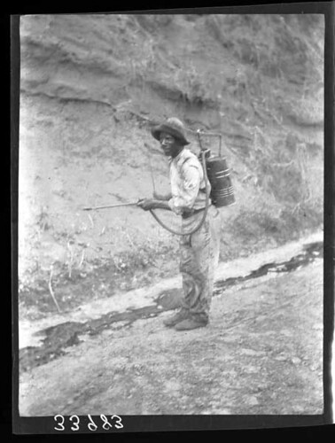 Name of Expedition: Panama Canal Zone Participants: Seth E. Meek, Samuel F. Hildebrand Expedition Start Date: 1911 Expedition End Date: 1912  Purpose or Aims: Zoology (Fishes) Location: Central America, Panama, Canal Zone  Original material: album print Digital Identifier: CSZ33983