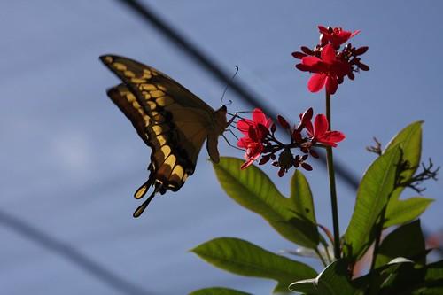 Butterfly Farm St. Maarten