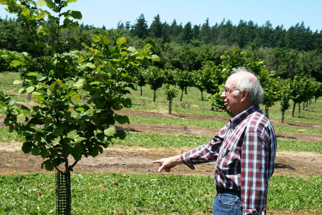Peter McDonald with new hazelnut trees