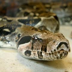 serpent / snake