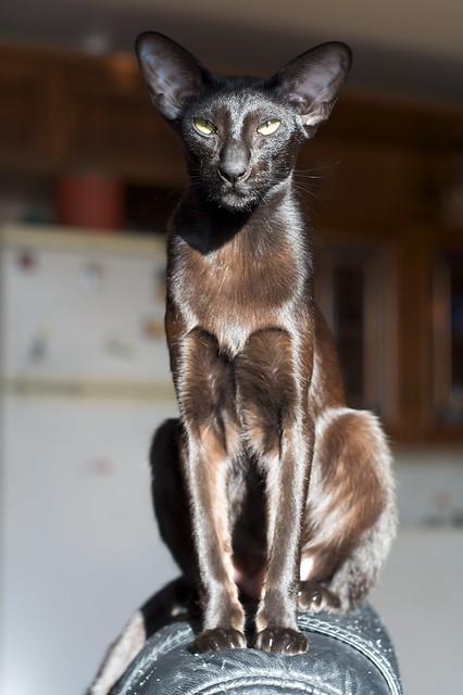 My cat, Usyaka