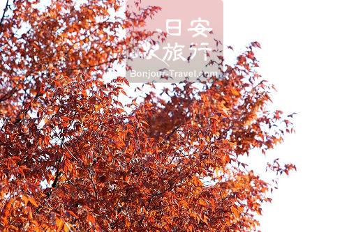 伏見稻禾大社 (1).jpg