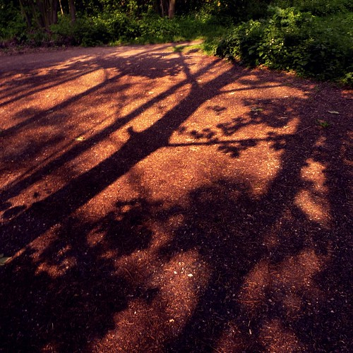 The Shadows of the Forest (Grivegnée) - Photo : Gilderic