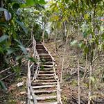03 Viajefilos en Laos, Bolaven Plateau 22