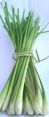 Lemongrass stalks | גבעולי למון גראס