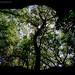 Florida Forest - DX Lens Matte