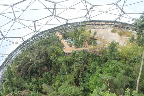 Rainforest biome lookout