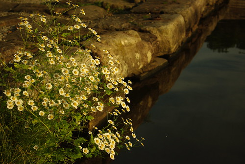 20130807-12_Canal Side Flowers - Bugsworth Basin near Buxworth by gary.hadden