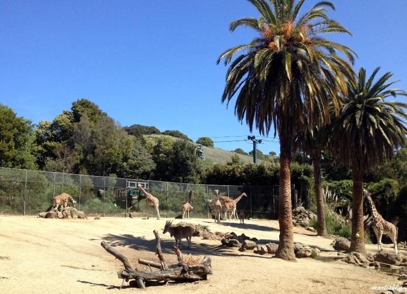 Oakland Zoo (28)