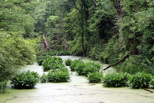 CVNP Swamp