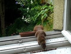 Eichhörnchen 3.5