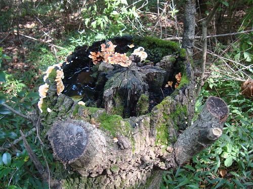 Baumstumpf-Biotop