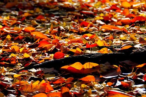 Fall Nagoyajo 139r