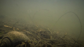 Indian River Paddling-010