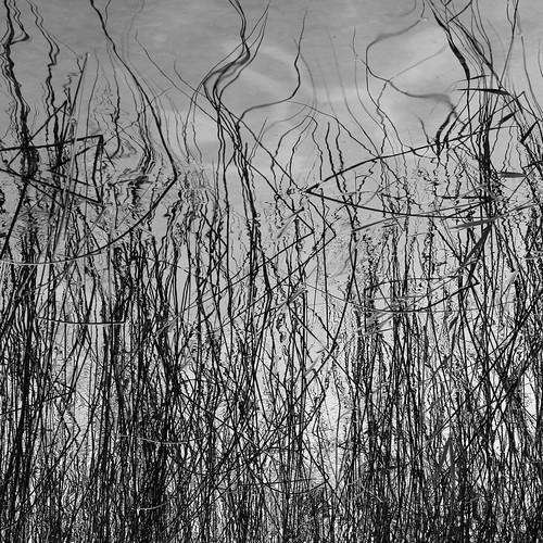 Reeds by Ulf Buschmann
