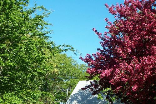 18 May 2013 Garden Treetops0001