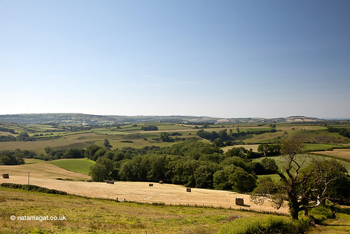 Summer, West Dorset by natamagat