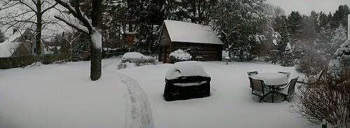 Snowy backyard, with path to dog pen