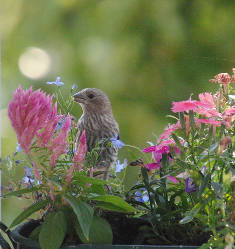 birds and flowers (2/6)