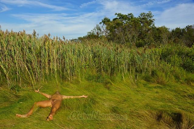 naturist 0004 North 40 Natural Area, Floyd Bennett Field, New York City, NY, USA