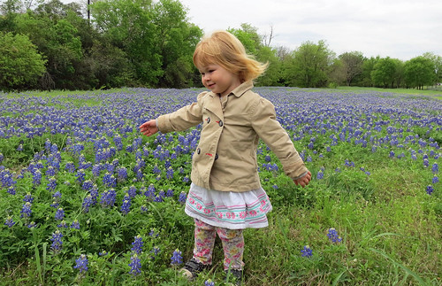 Bluebonnets, Spring 2014