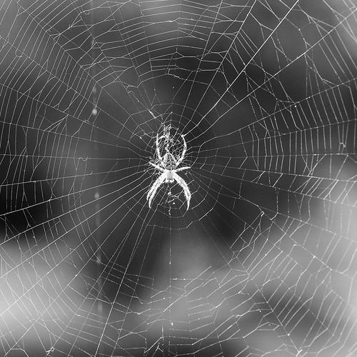 Week 34/52 - Itsy Bitsy Spider by Flubie
