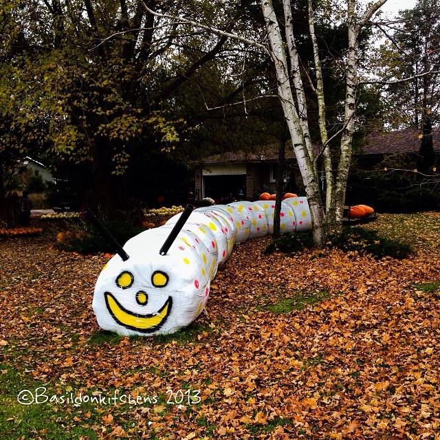 Oct 30 - cute {a cute hay-bale caterpillar at one of the farm stands} #photoaday #caterpillar #hay #bale #haybale #cute #princeedwardcounty #fall #autumn #leaves #trees #langridgefarm #langridge #farmstand