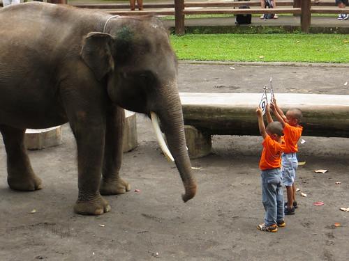 elephant maths