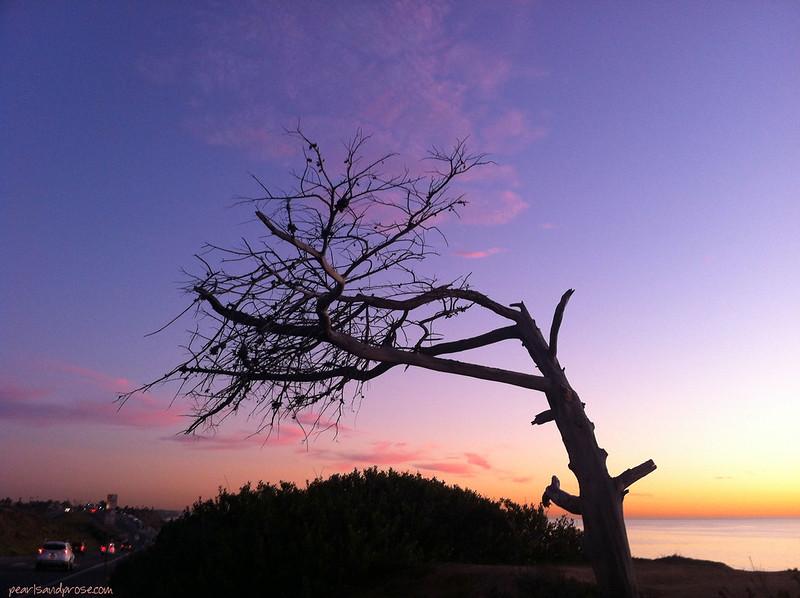 beach_tree_web