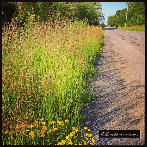 June 18 - street {this is my street directly in front of my house}  #fmsphotoaday #street #princeedwardcounty #oldmilfordroad #millerroad #rural #wildflowers