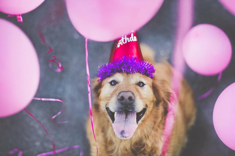 Happy 7th Birthday, Chupman!